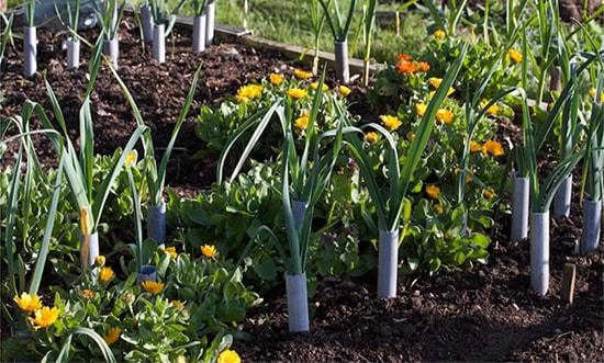 garden-resized-min