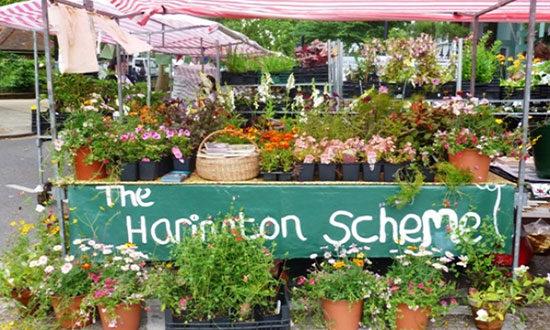 harington-scheme