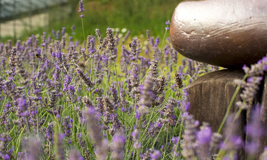 omved-garden