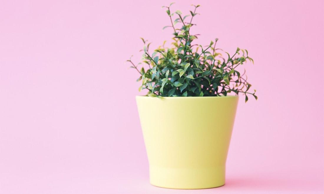 plant-pot-min
