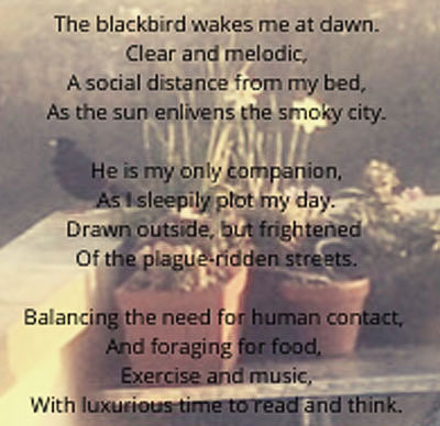 BLACKBIRD SINGING IN THE TIME OF PLAGUE, Maggy Meade-King
