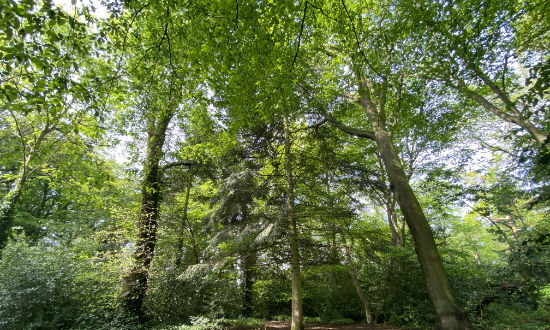 highgate-woods