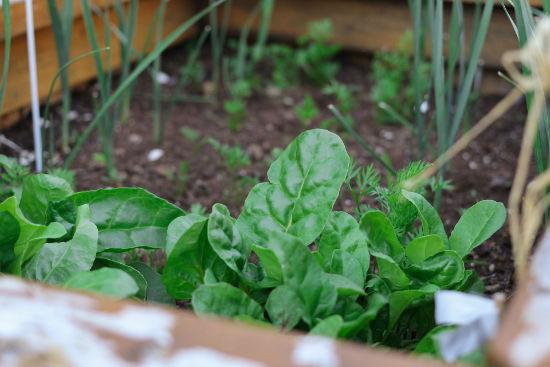 kitchen-garden-feature