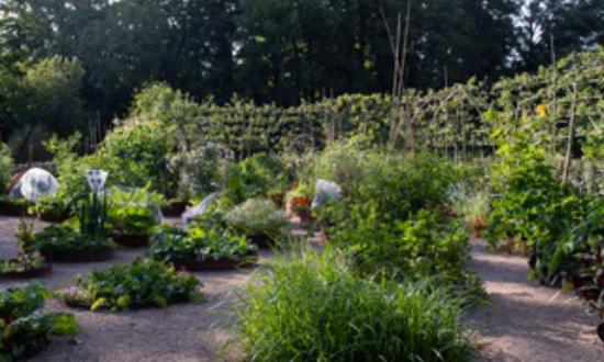 omved-gardens-1